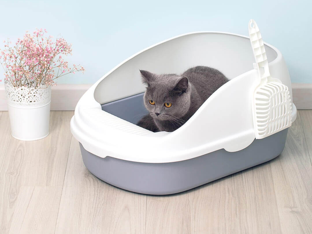 Xiaomi SSC Cat Litter Box