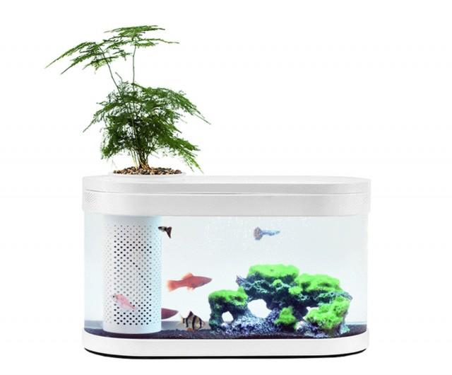 HFGH Amphibian Eco-Aquarium
