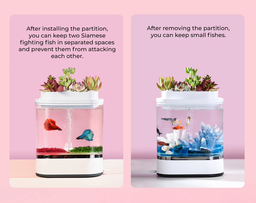 HFJH Amphibian Eco-Aquarium ( Mini Edition )