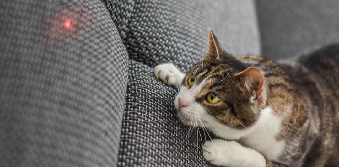 Petoneer Smart Cat Laser Toy